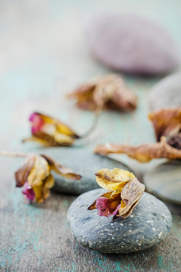 Kuuroordconcept met zenstenen en orchidee stock afbeeldingen