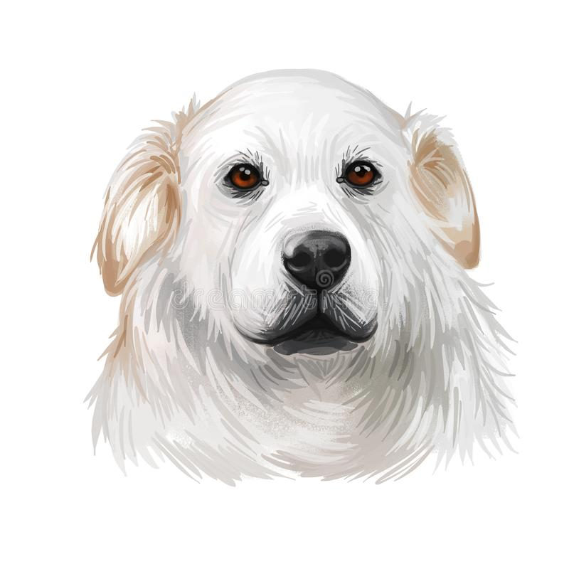 Kuvasz Hungarian ancient breed of livestock dog digital art illustration. Pet and guard dog, originated in Hungary as protector of vector illustration