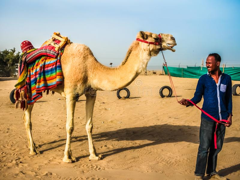 A Camel and His Owner royalty free stock photography