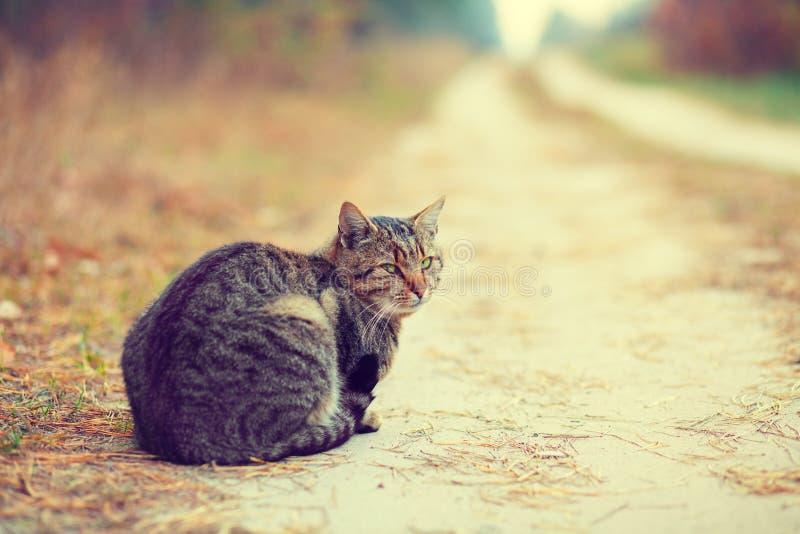 Kuzia - ältere Katze (12 y lizenzfreie stockfotografie