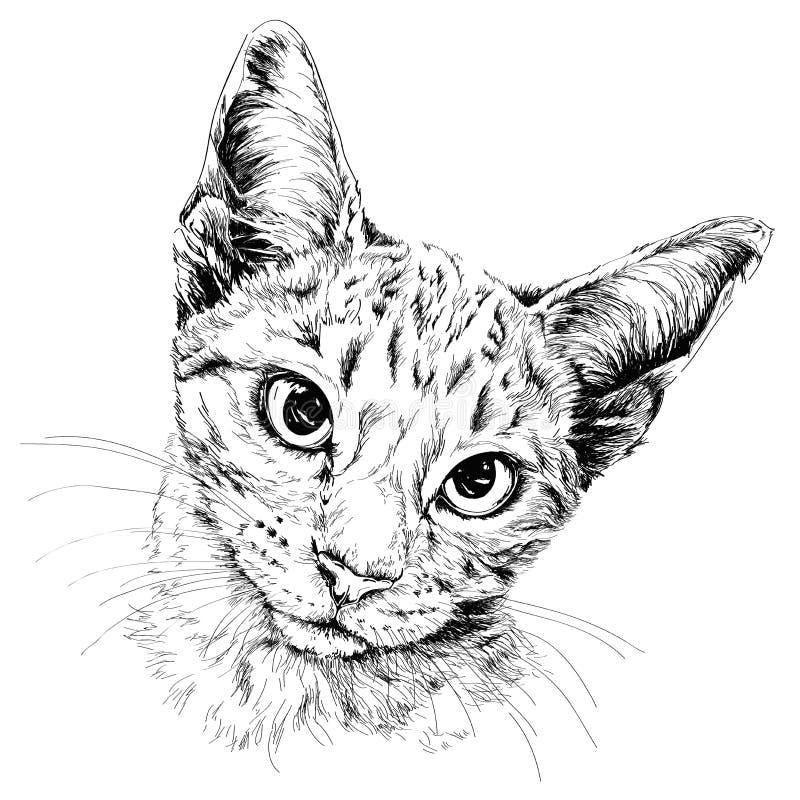 Kuzia - ältere Katze (12 y Hand gezeichnete Abbildung stock abbildung