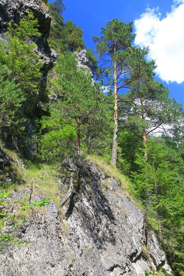 Kvacianska dolina -谷在区域Liptov,斯洛伐克 免版税库存图片