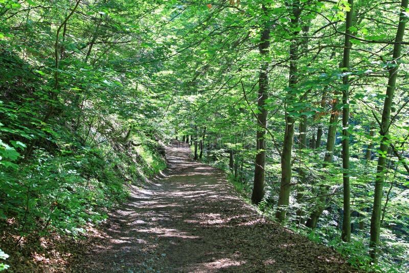 Kvacianska dolina -谷在区域Liptov,斯洛伐克 免版税库存照片