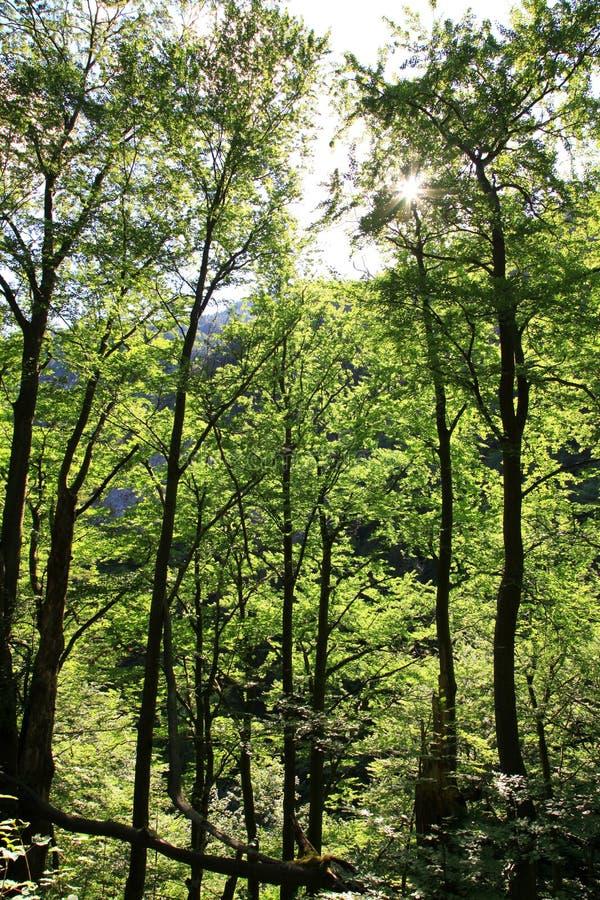 Kvacianska dolina - valley in region Liptov, Slovakia stock image