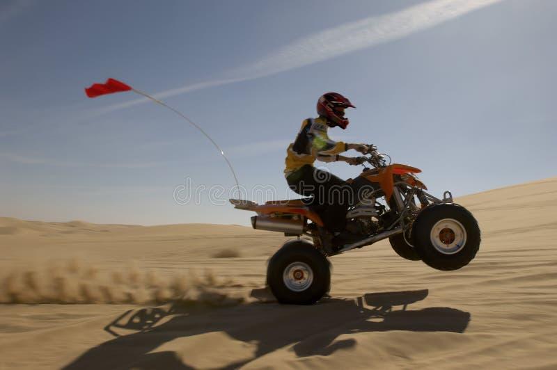 Kvadratcykel Rider Doing Wheelie In Desert arkivbilder