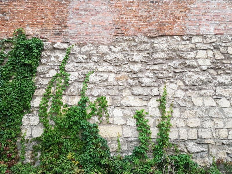 Kvadrerar medeltida väggar för tegelsten och för murverk i Lviv på Mytnaya Monument av arkitektur av Ukraina under skyddet av lag arkivfoto