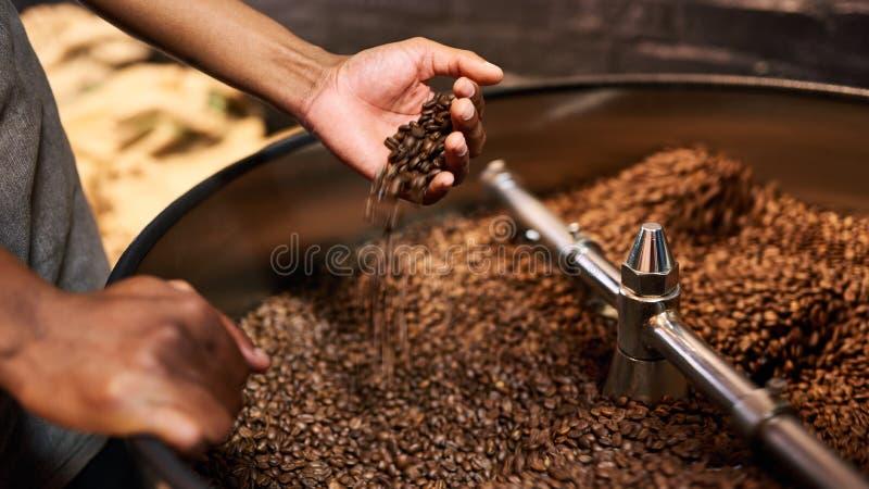 Kvalitets- kontroll av grillade kaffebönor i afrikanska händer för man` s royaltyfri fotografi