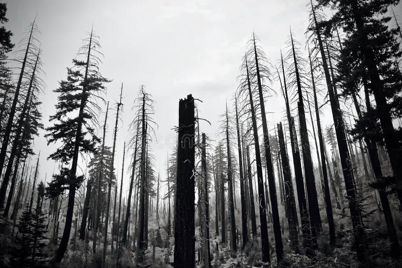 Kvarlevor av lös brand fotografering för bildbyråer