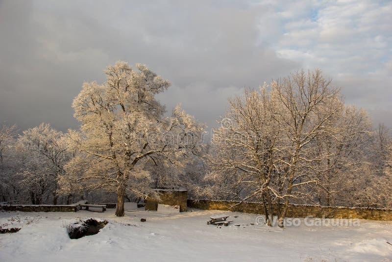 Kvetera monastery territory and snow cowered trees on the sunset. Snow cowered trees on the sunset in Kvetera monastery. Kakheti region in Georgia country stock photography