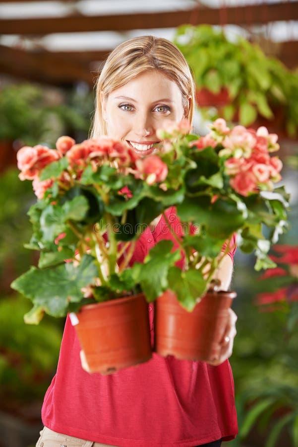Kvinna i blomsterhandel med Eliator begonior royaltyfria bilder