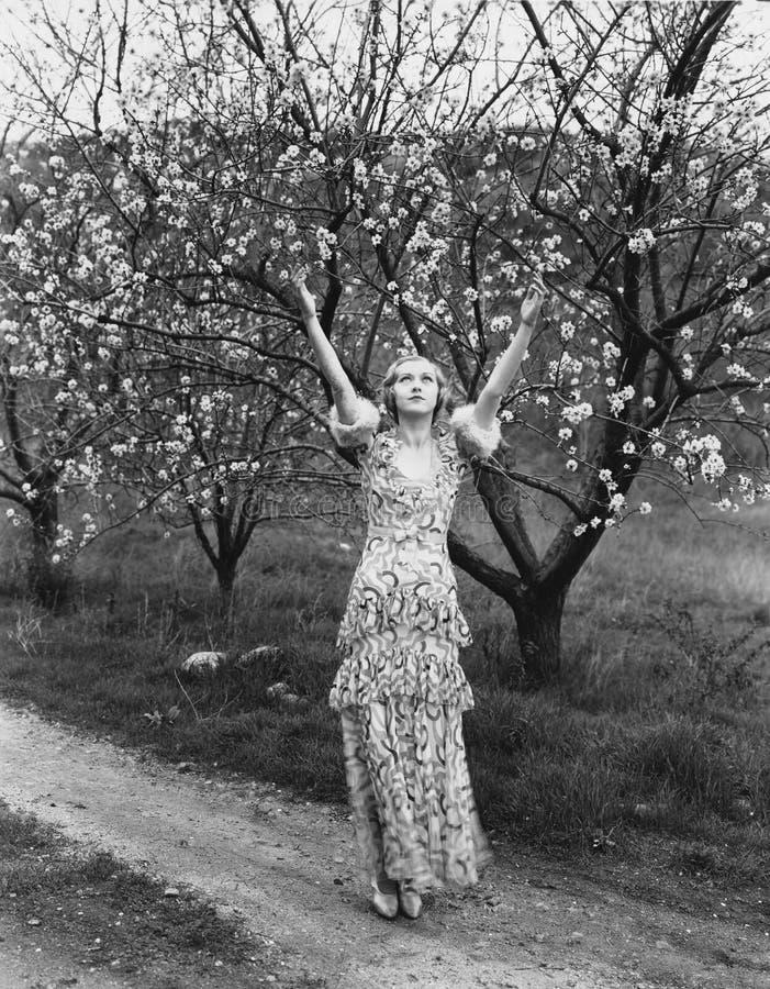 Kvinna med blomningträd (alla visade personer inte är längre uppehälle, och inget gods finns Leverantörgarantier att det ska göra arkivbild