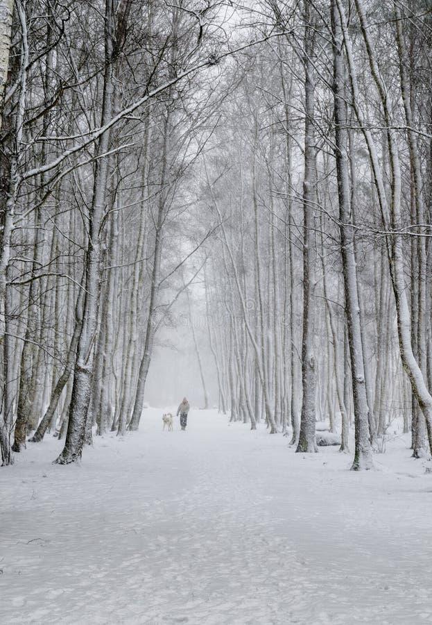 Kvinna med en hund på en snöig gränd arkivfoto