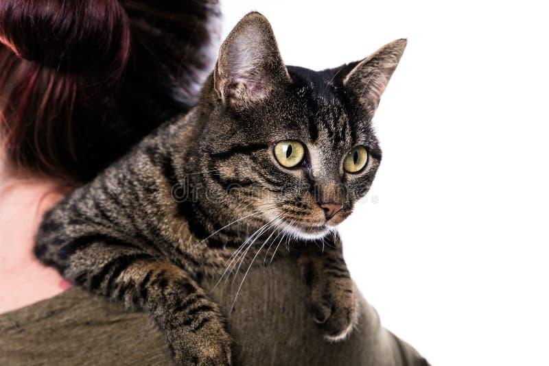Kvinna med en randig katt royaltyfria foton