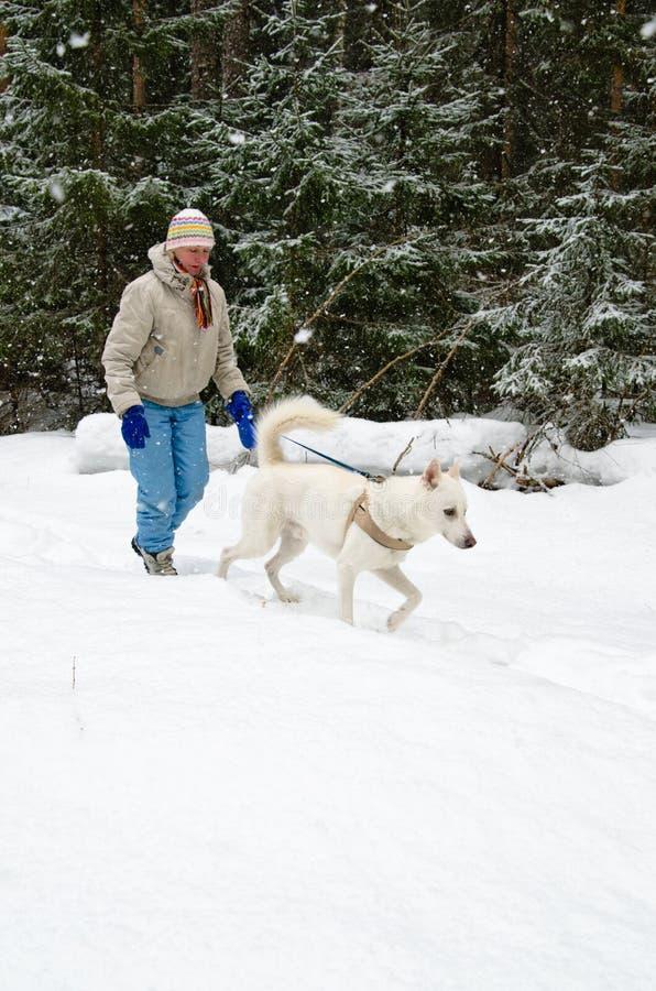 Kvinna med en vit hund på en gå i trän under ett snöfall arkivbild