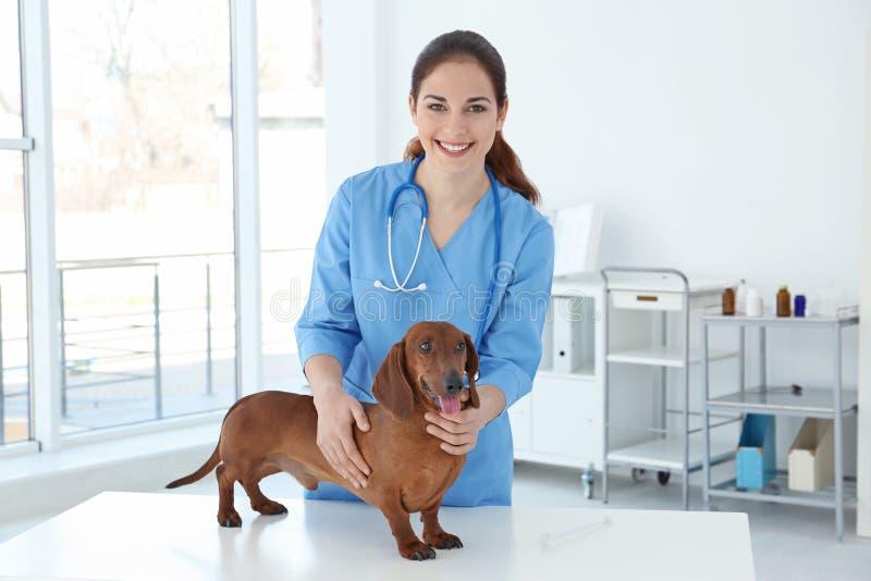 Kvinna med hunden i veterinär- klinik arkivbild