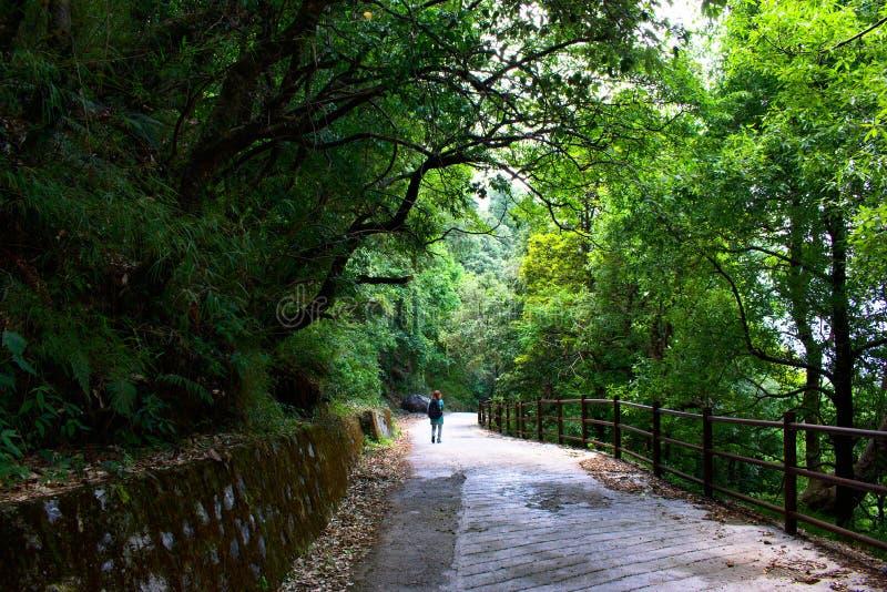Kvinna med rött hår som går till och med skogen längs nätta gröna träd för en slinga mycket och i träna som, hon trekking, på en  arkivbild