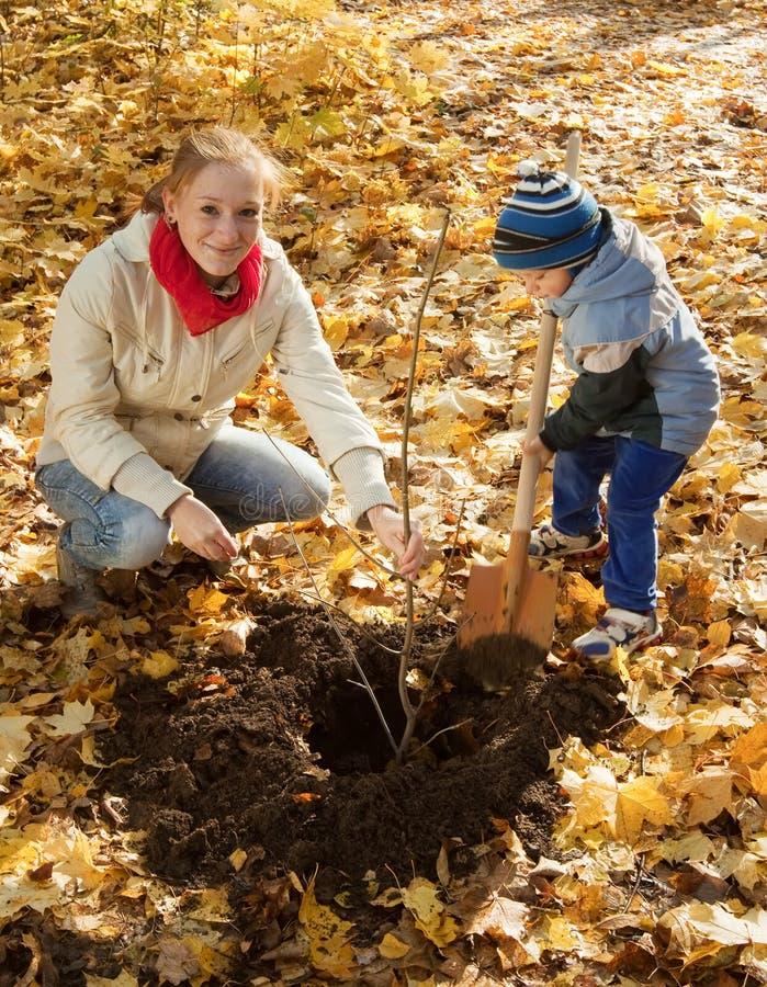 Kvinna med sonen som planterar treen i höst arkivfoto