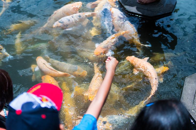 Kvinna och barn som matar den härliga färgade fisken i dammet Taman Tirtagangga tempel på Bali royaltyfri bild
