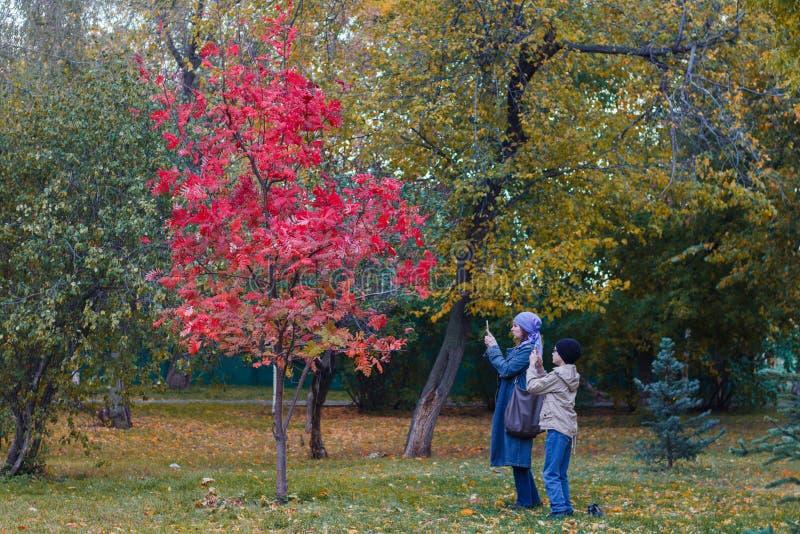 Kvinna och hennes barn som tar bilder på härligt träd för mobiltelefon med röda sidor i parkera i höst royaltyfri fotografi
