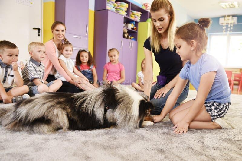 Kvinna- och terapihundarbete med ungar arkivfoton