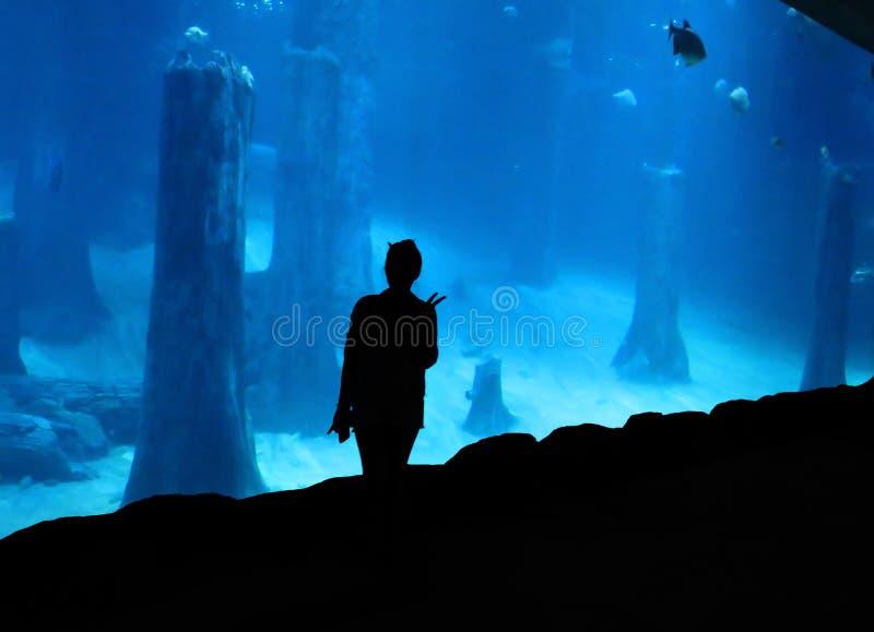 Kvinna på akvariet royaltyfri bild