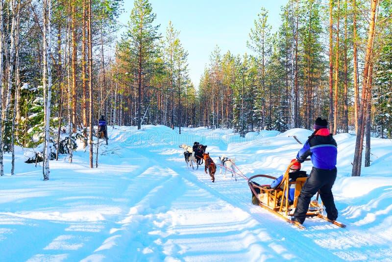Kvinna på Husky Dogs Sled i Rovaniemi arkivfoto