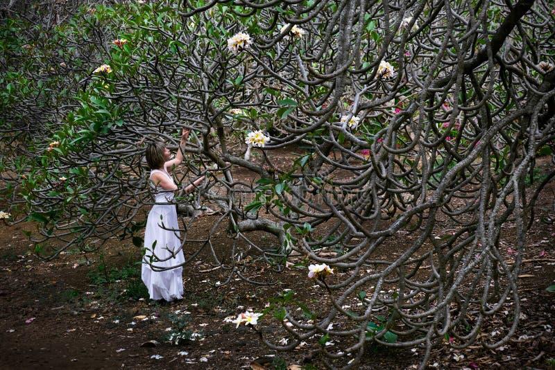 Kvinna på semester vid Plumeriaträdet med vita blommor fotografering för bildbyråer