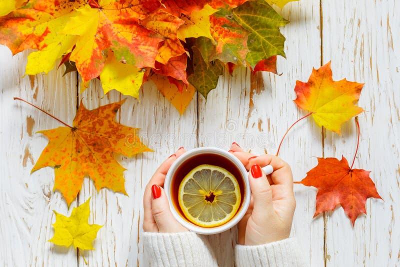 Kvinna` s räcker att rymma en kopp av varmt te med citronen på en vit trätabell med färgrika höstsidor royaltyfri bild