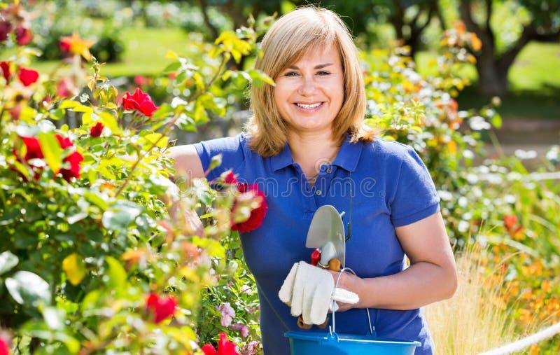 Kvinna som arbeta i trädgården röda rosor och innehavträdgårds-hjälpmedel på solen royaltyfria bilder