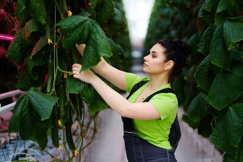 Kvinna som arbetar i ett växthus arkivbild