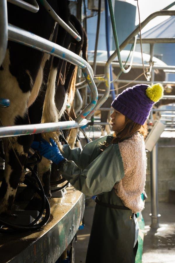 Kvinna som arbetar med automatiserad mekaniserad mjölka utrustning royaltyfria bilder