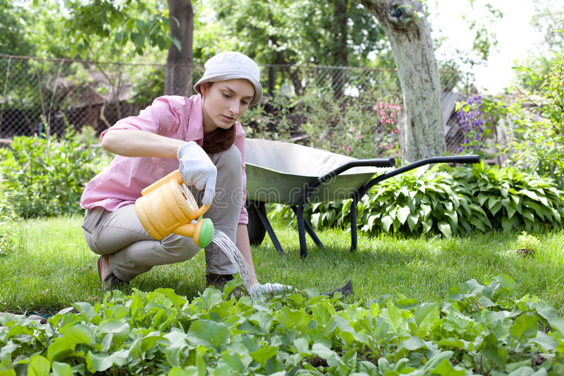 kvinna som bevattnar den trädgårds- sängen royaltyfria foton