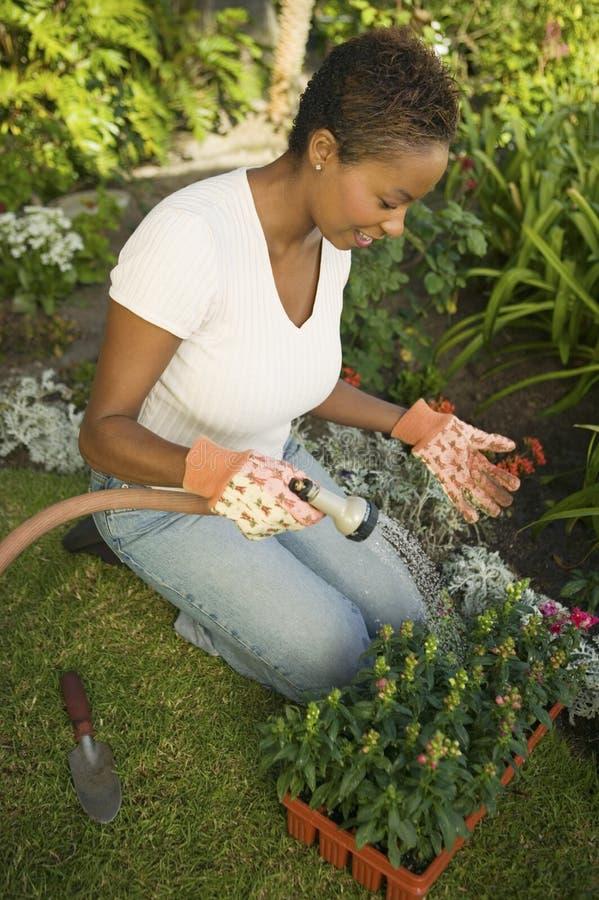 Kvinna som bevattnar växter i trädgård arkivbilder