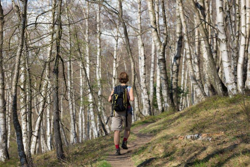 Kvinna som fotvandrar i skogen, en person som går i skogsmarken som vandrar sommaraffärsföretaglopp, bakre sikt, tonad bild arkivfoto