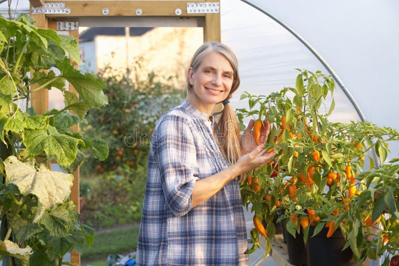 Kvinna som fungerar i växthus royaltyfri fotografi