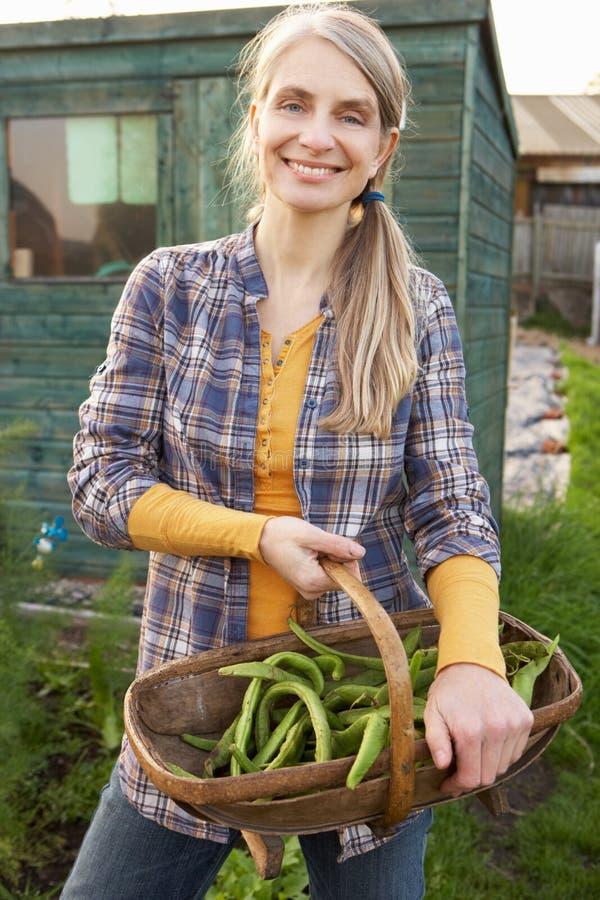 Kvinna som fungerar på odlingslott royaltyfri bild