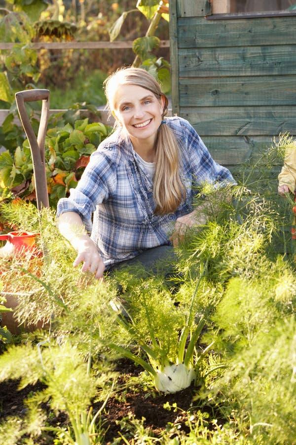 Kvinna som fungerar på odlingslott royaltyfri fotografi