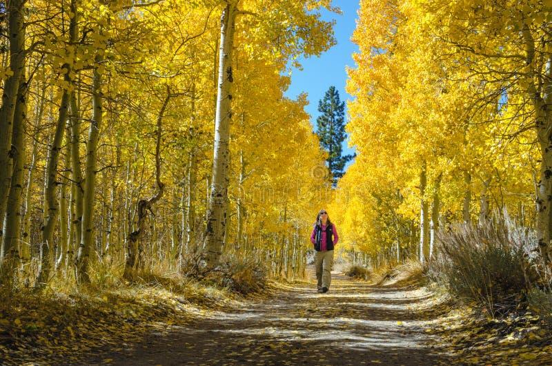Kvinna som går bland nedgångfärger arkivfoto