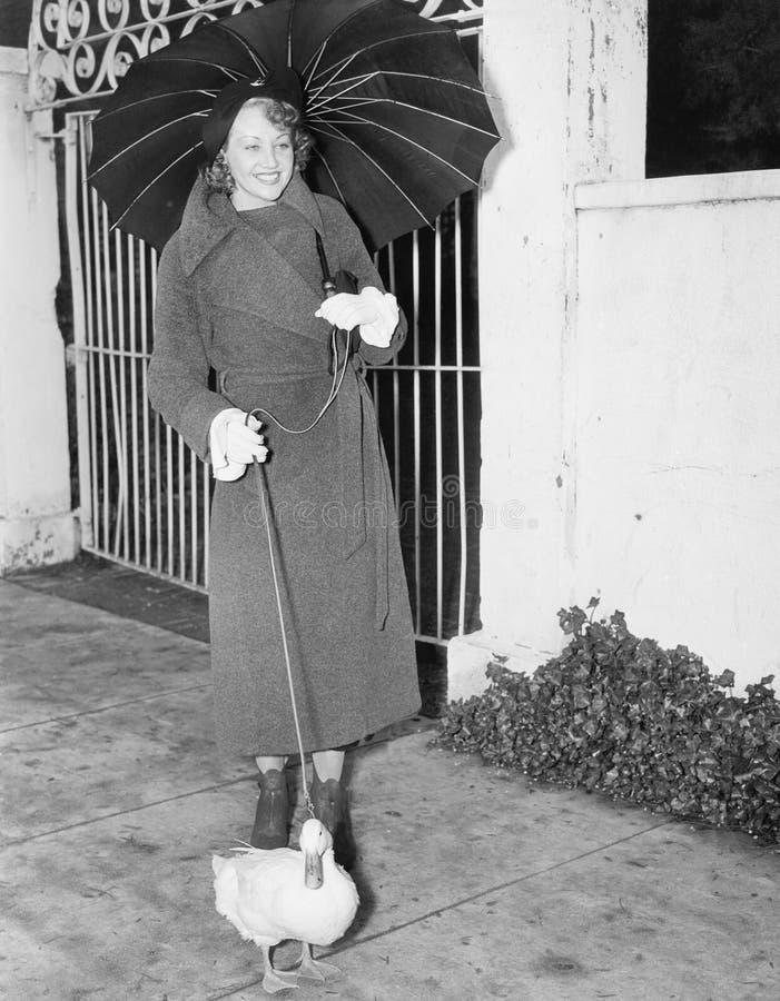 Kvinna som går i regnet med en and på en koppel (alla visade personer inte är längre uppehälle, och inget gods finns Leverantörwa royaltyfri foto