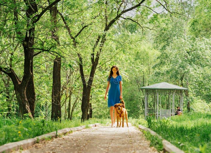 Kvinna som går med den labrador hunden i sommar royaltyfri bild