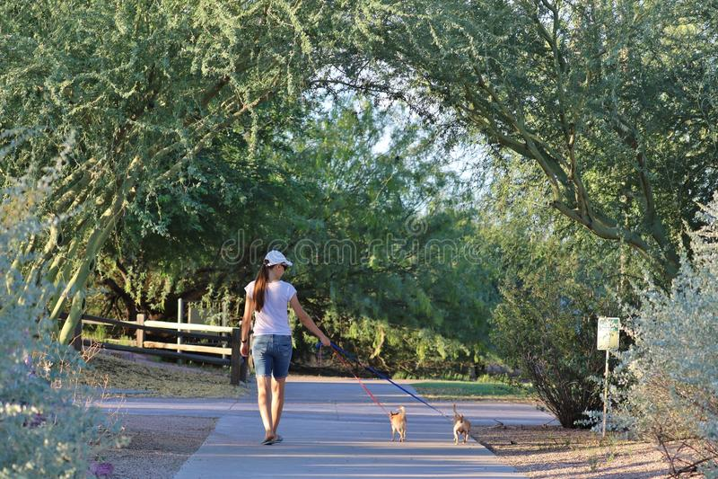Kvinna som går med hundkapplöpning arkivfoton