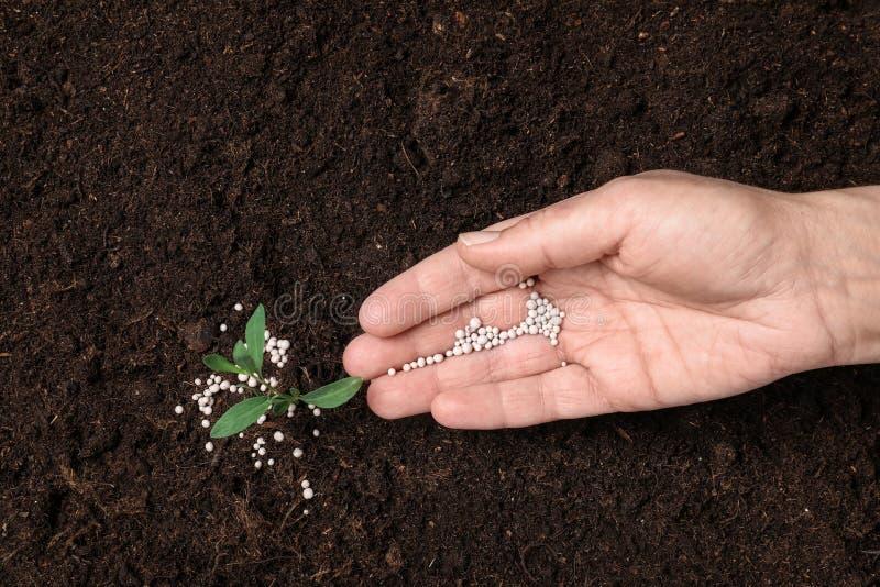 Kvinna som gödslar växten i jord arbeta i tr?dg?rden s?song royaltyfria foton