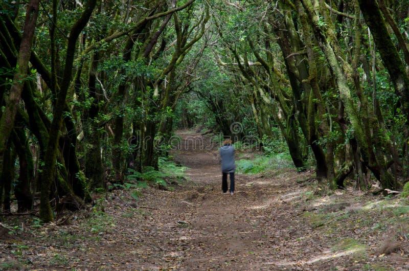 Kvinna som igenom går av en laurisilvaskog royaltyfri bild