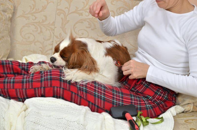 Kvinna som kammar hennes hund royaltyfri bild