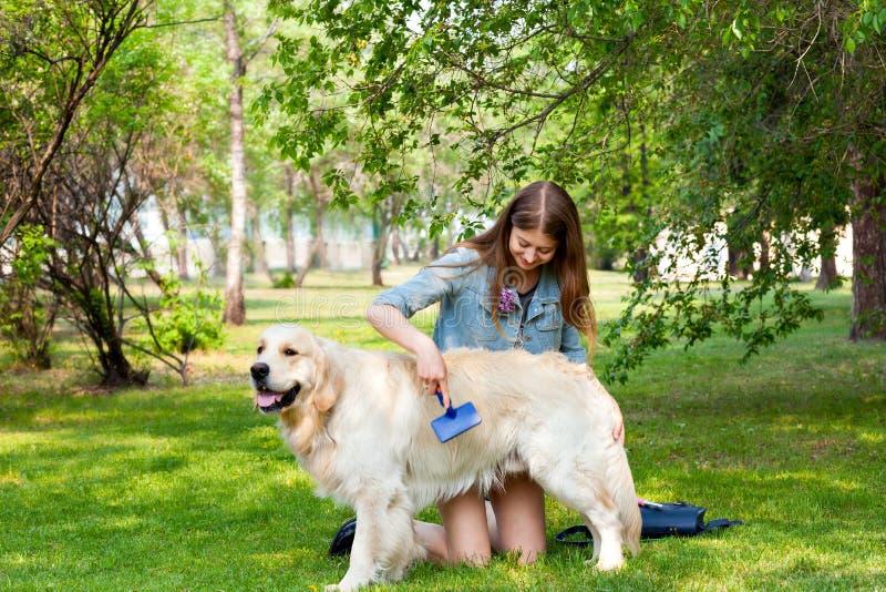 Kvinna som kammar pälsgolden retrieverhunden på en grön gräsmatta royaltyfria foton