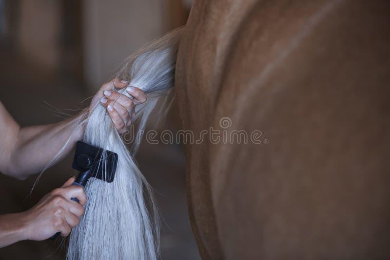 Kvinna som kammar svansen av hästen royaltyfri fotografi