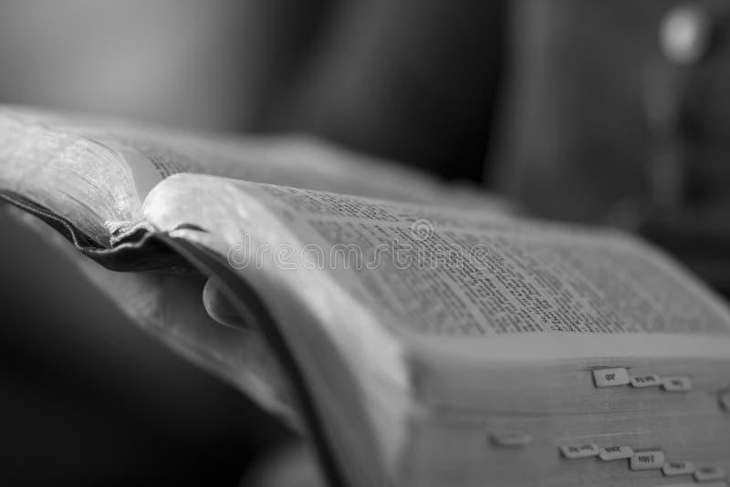 Kvinna som läser bibeln royaltyfri fotografi