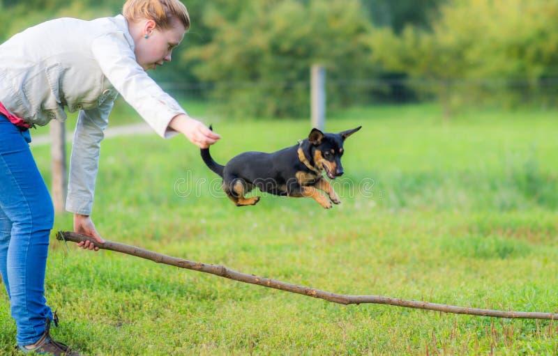 Kvinna som lite utbildar hunden royaltyfria foton