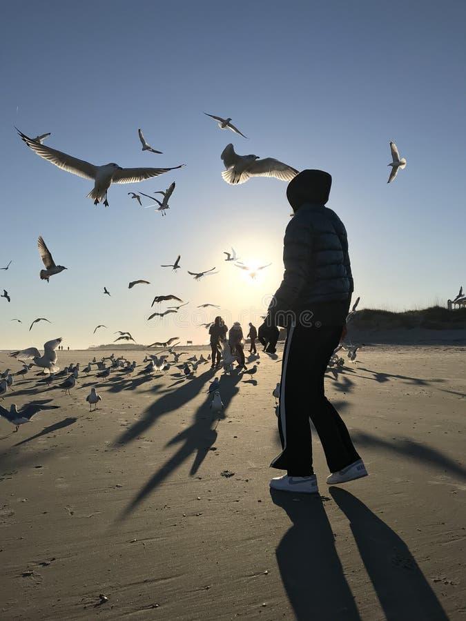 Kvinna som matar fåglarna på solnedgången på Tybee Island - GEORGIA - USA royaltyfria foton