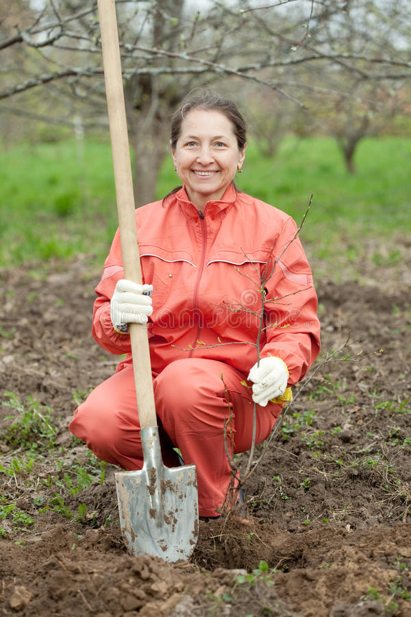 Kvinna som nollställer buskegroddar royaltyfri fotografi